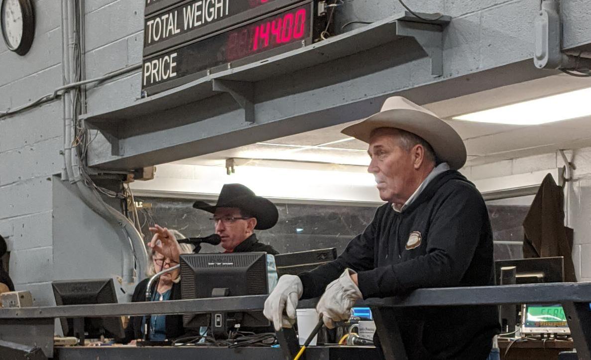 Cattle Auction.jpg