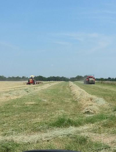 Elmer Porter Of Bluejacket Oklahoma Cuts His Midland 99 Hay The Hybrid Was Released In 1999 And Developed By Agricultural Experiment Station