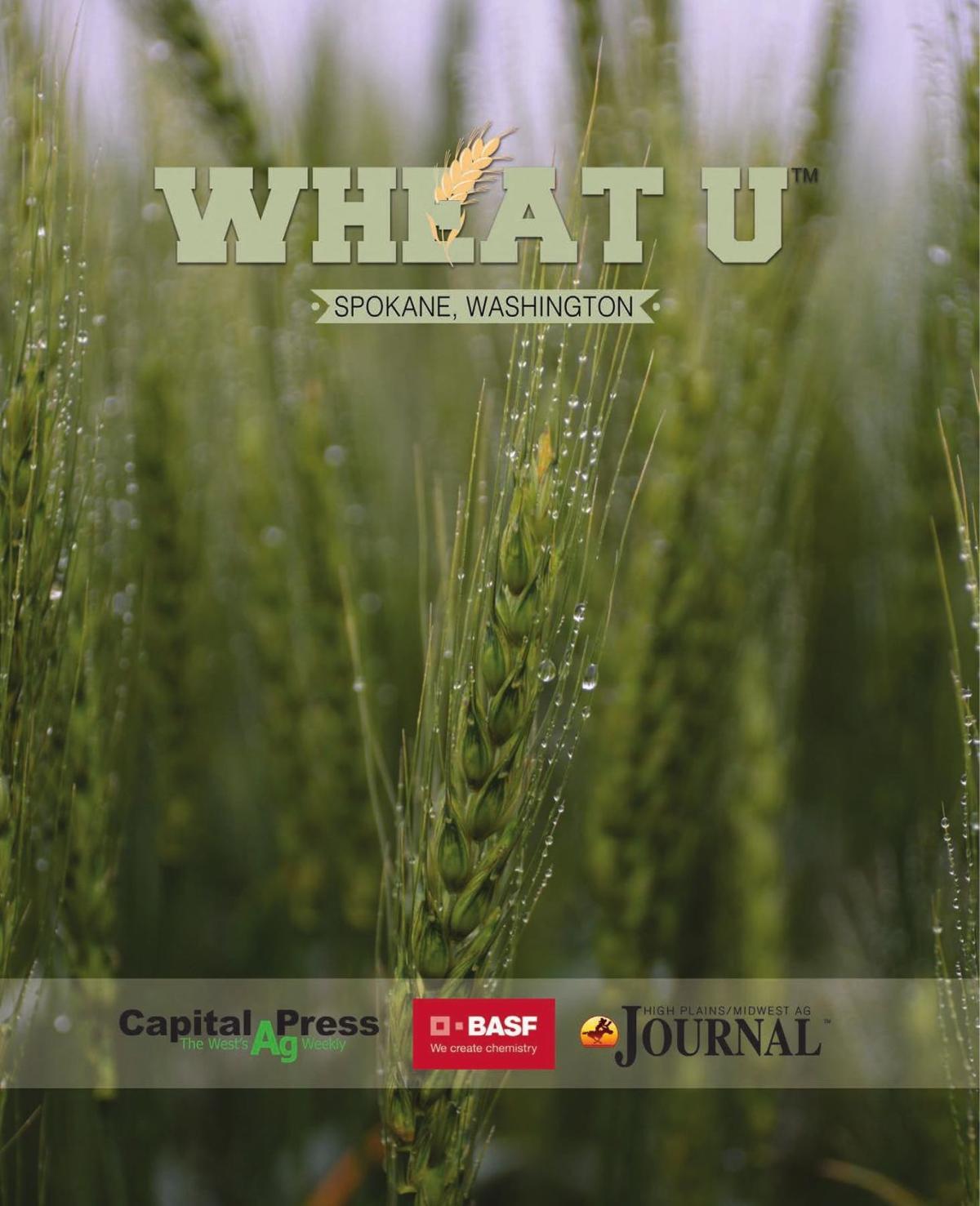 Wheat U