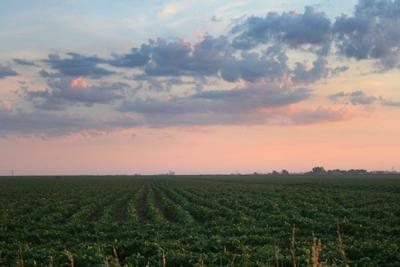 Sunrise Soybeans-S Gilmore-Summer.jpg