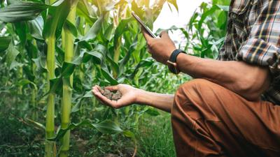 farmer holding the soil in corn field and using mobile phone. modern application of technologies in agricultural activities.