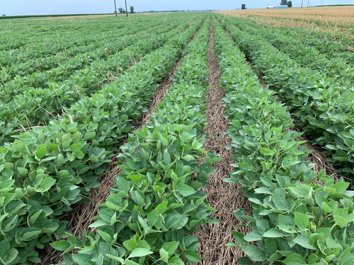 Michael Vittetoe soybean trial in cereal rye 2 GO SEED.jpg