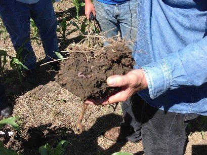building soil organic matter takes time - figure 1.jpg