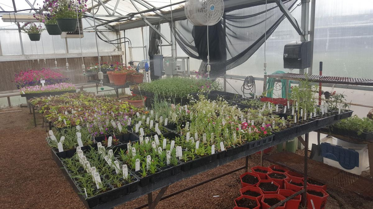 The Holly Colorado Ffa Greenhouse Provides Valuable Products For Community Members To Purchase While Supporting The Agriculture Education Program At The
