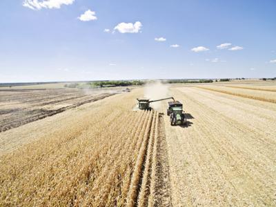 Corn Harvest-L Kimbrell-Summer.jpg