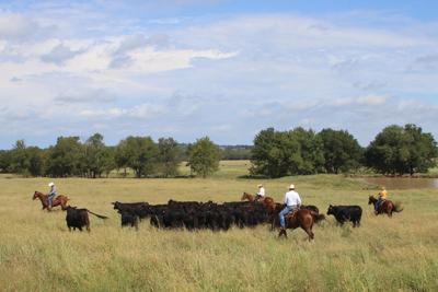 The A Bar Ranch multitasks for maximum return