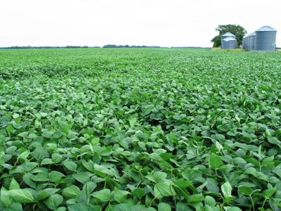 Soybean Field with barn.jpg