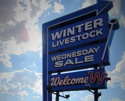 Winter Livestock stock photo
