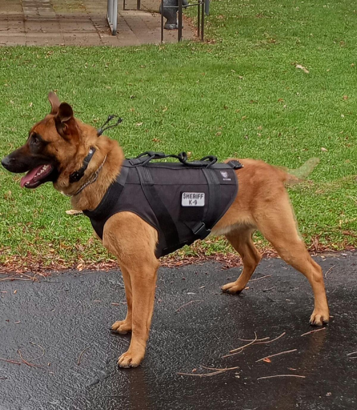 St. Croix County K-9 Ares