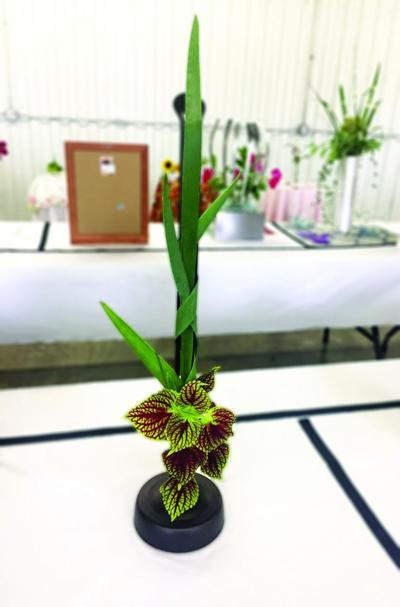 Germantown Garden Club announces flower show award winners
