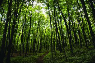 Forest forensics and roadside ecology