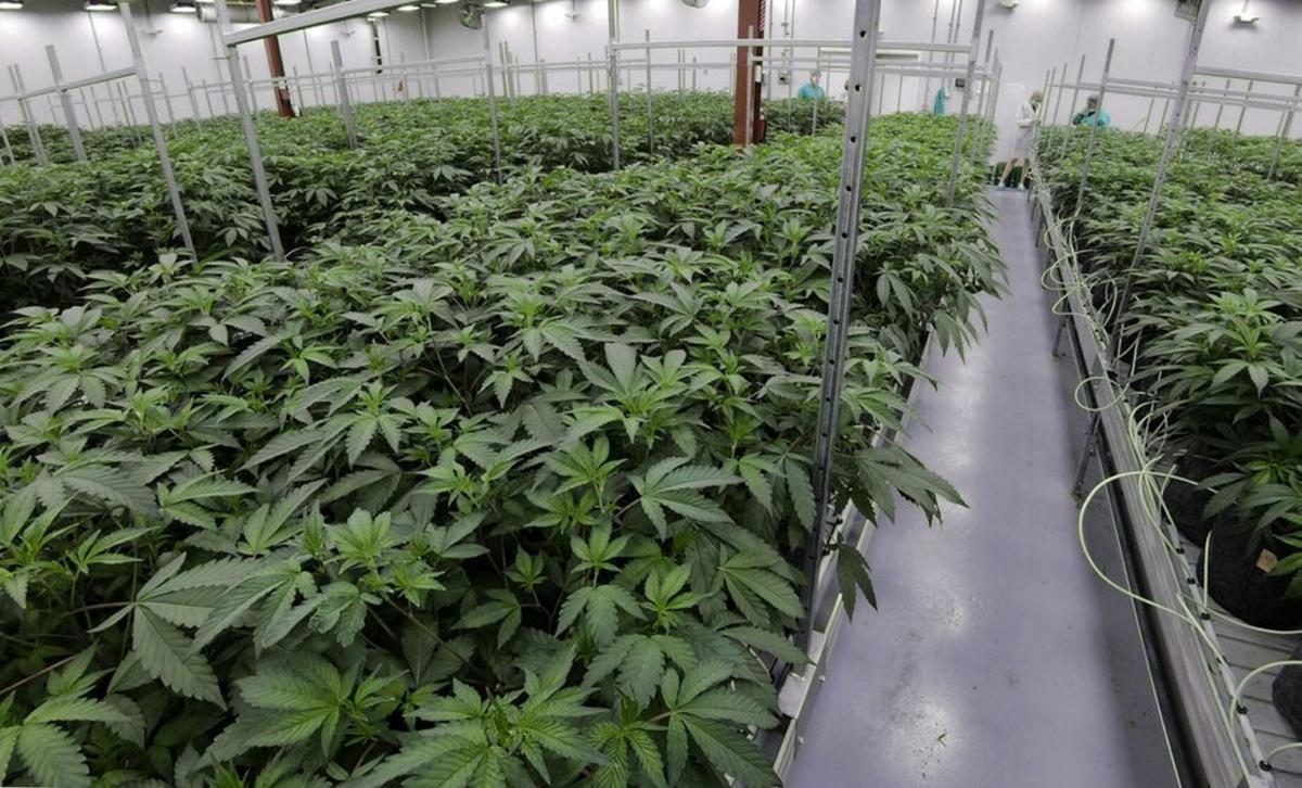 Farmers weigh what legalized pot means