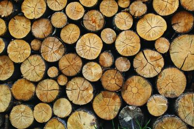 Access to free firewood is common in Northeast