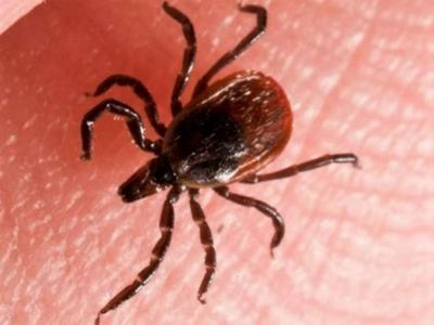 Bill proposed to stamp out Lyme disease