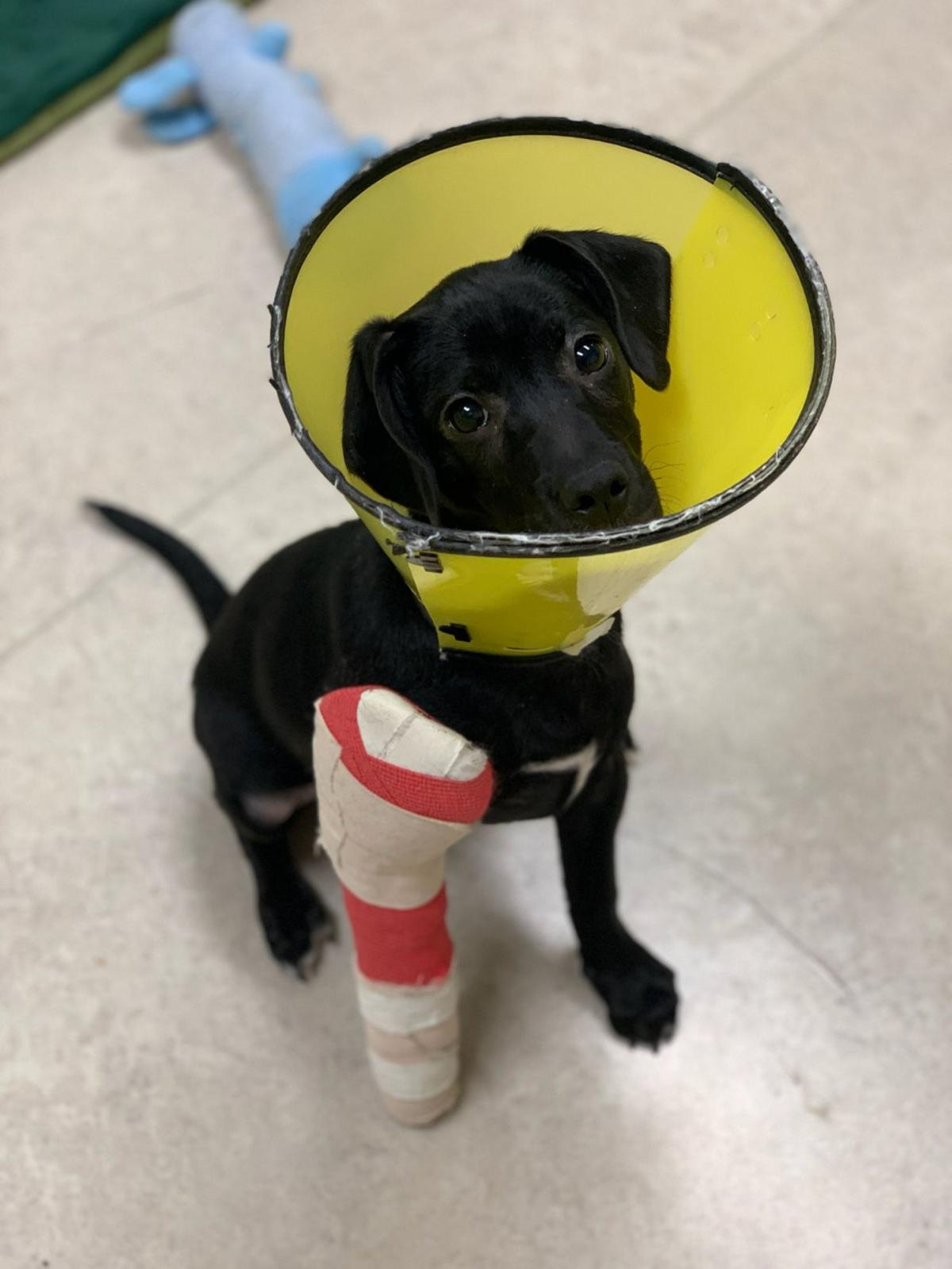 Happy ending: Rudy finds forever home