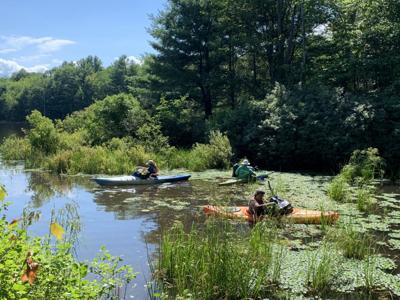 Volunteer to remove invasive water chestnut from Hand Hollow Conservation Area