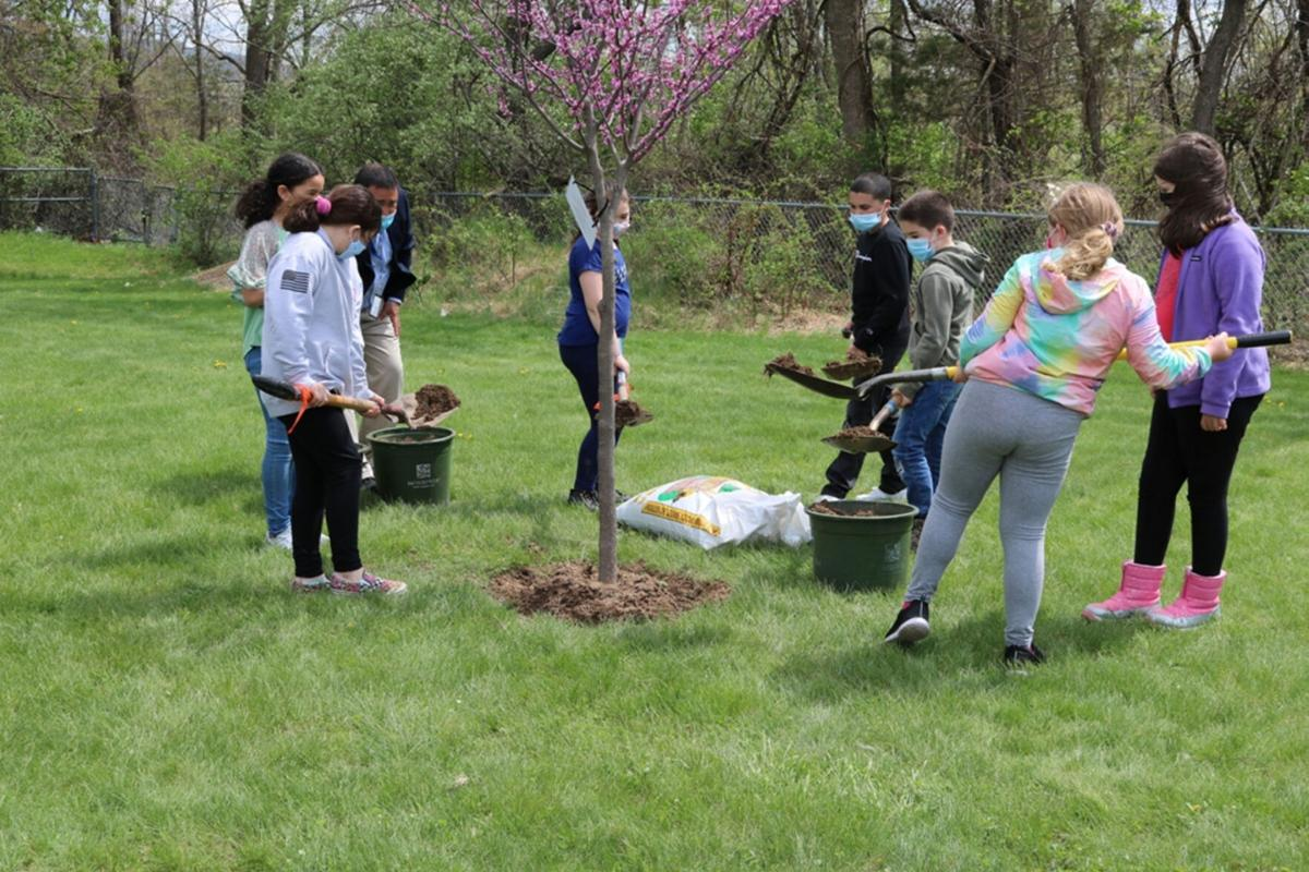 Catskill plants Eastern Redbud to celebrate Arbor Day