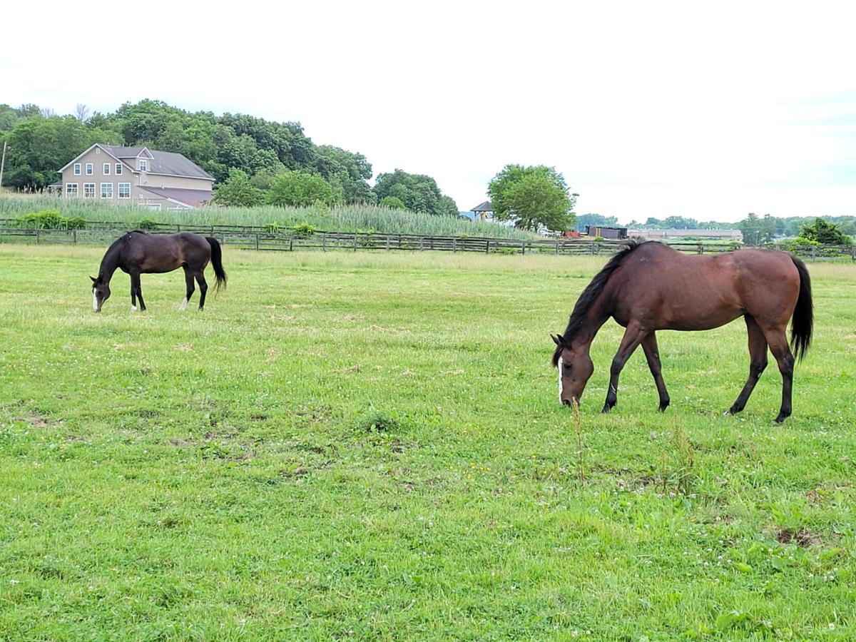 State law would ban racehorse slaughter