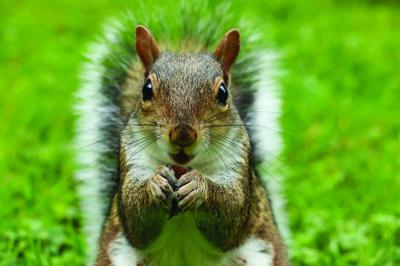 Bulbs and humans: Rising above the squirrel mentality