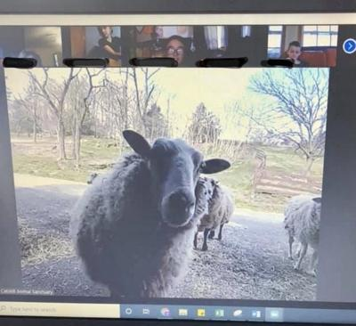 Catskill Animal Sanctuary joins Goat 2 Meeting partnership with Sweet Farm