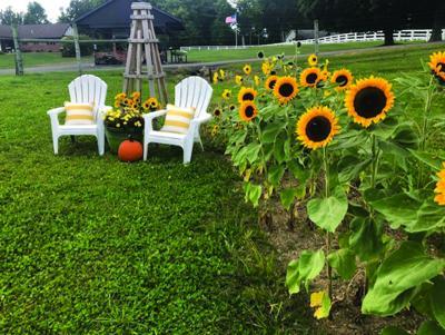 Clematis Garden Club announces the October garden of the month