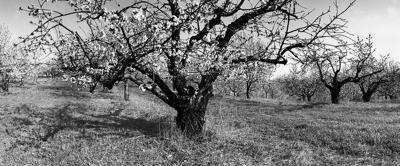 On Works of Noted Hudson Valley Photographer