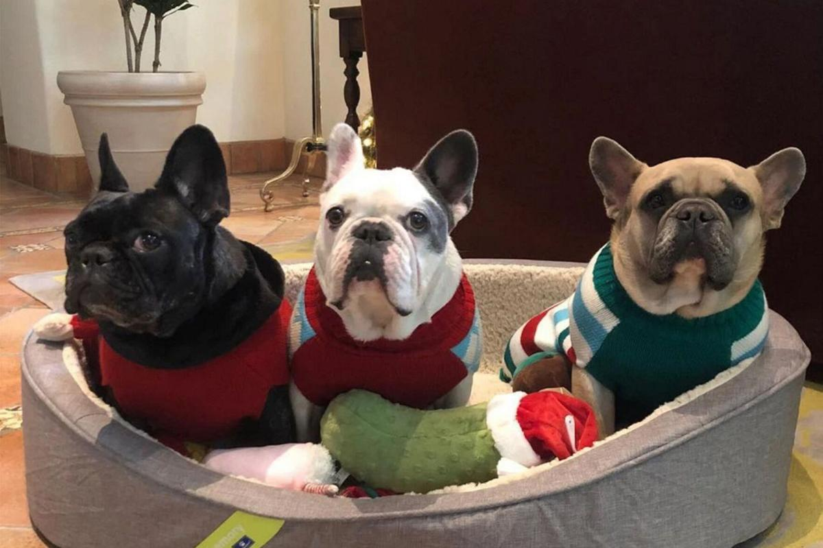 Five charged in Gaga dog walker attack
