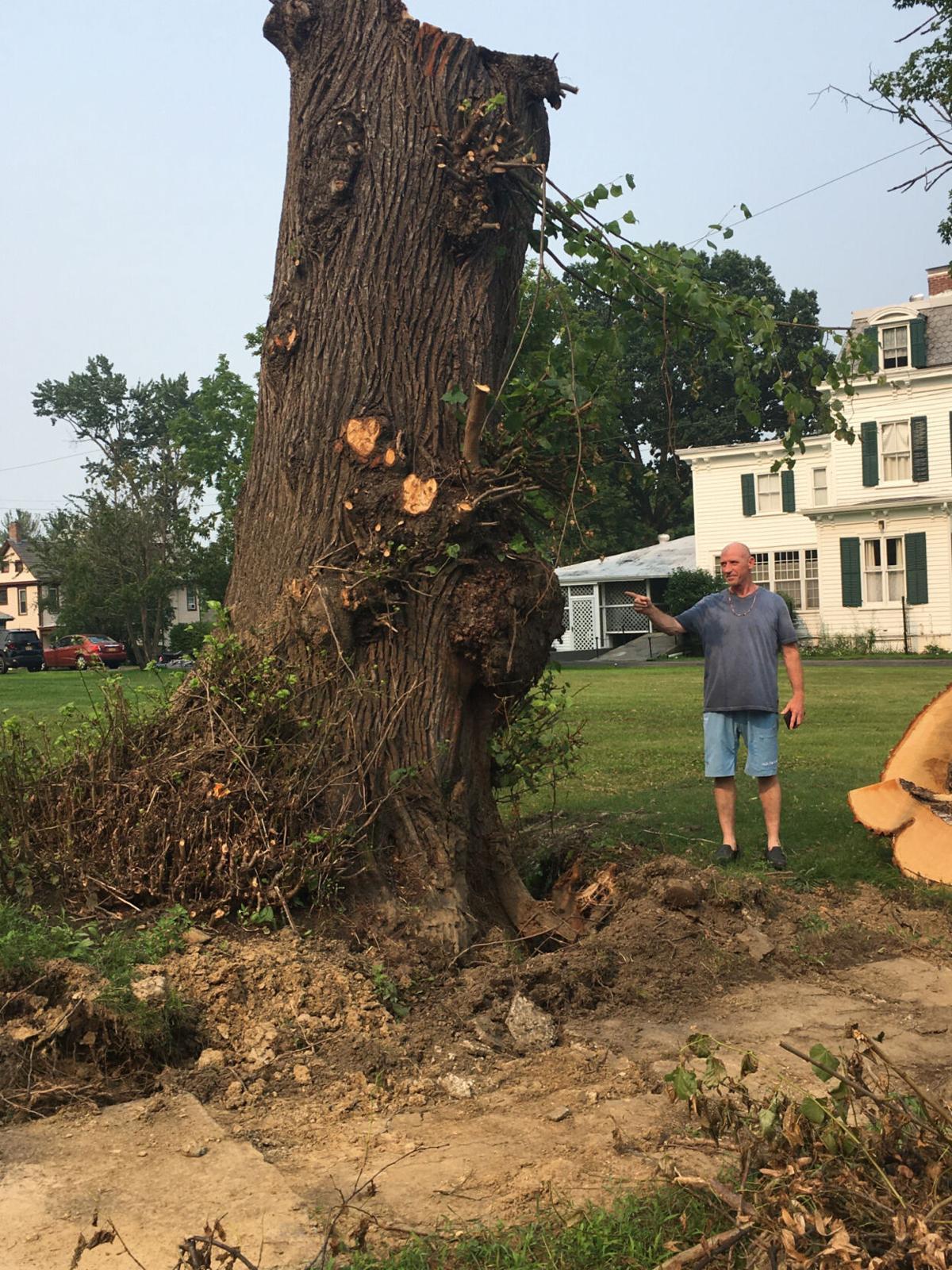 Felled tree embodies village spirit