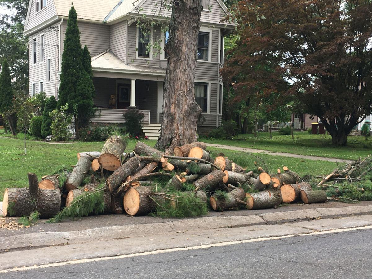 Village looks for dangerous trees in storm's wake