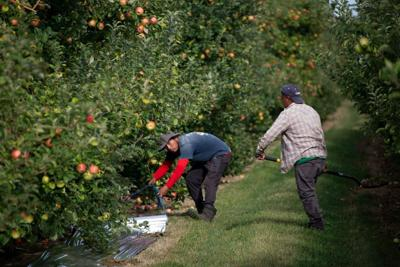 11 cases linked to fruit farm