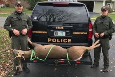 Earlton man fined in illegal deer slaying