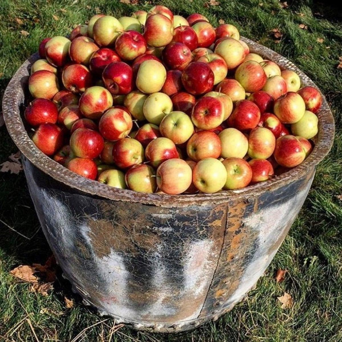New apple disease surfaces in Twin Counties