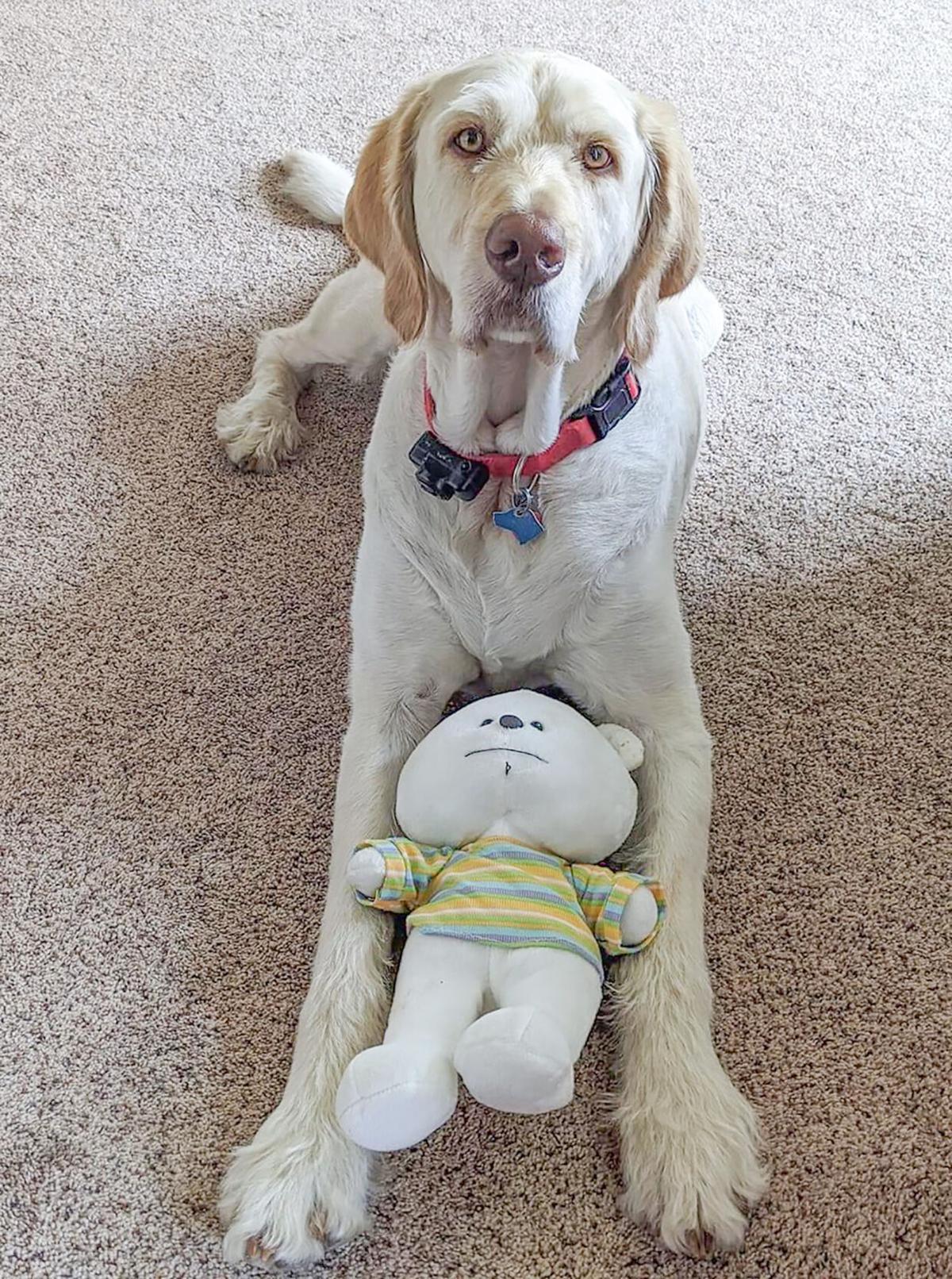 Jasper the dog photo 2