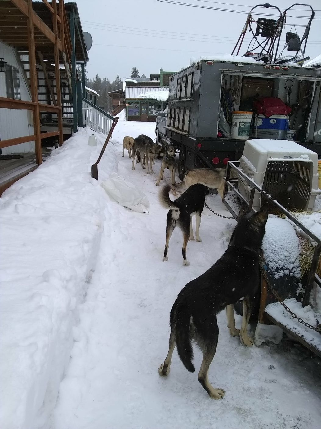 Elk City News: Musher
