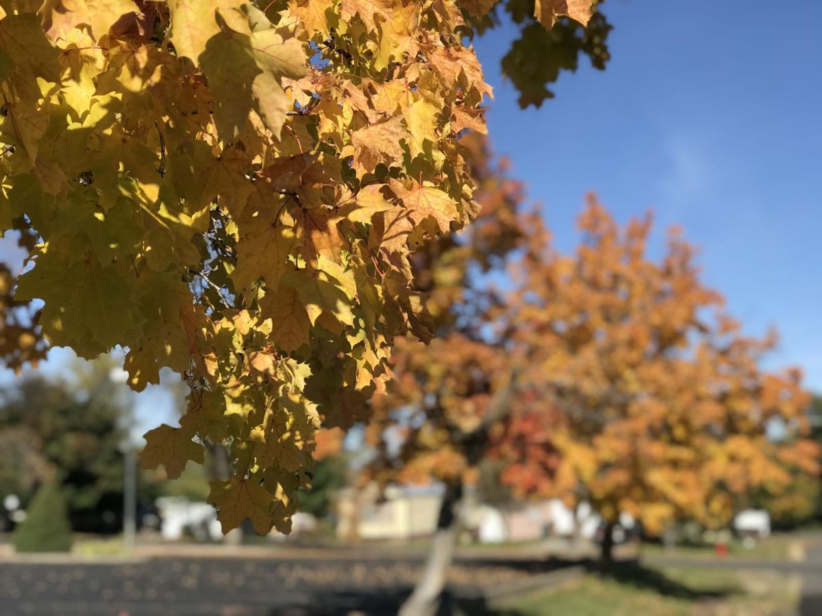 Fall in Grangeville