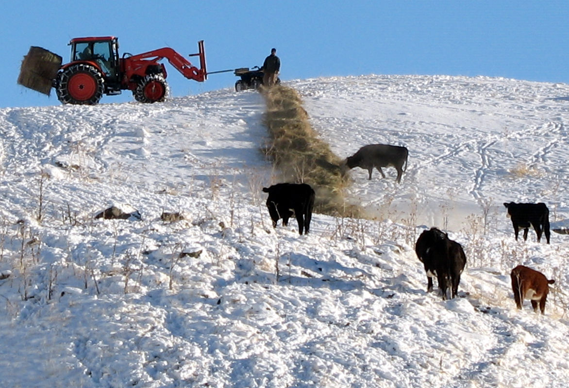 Gill Ranch featured in ICA book on '100 Years of Idaho Cattle'