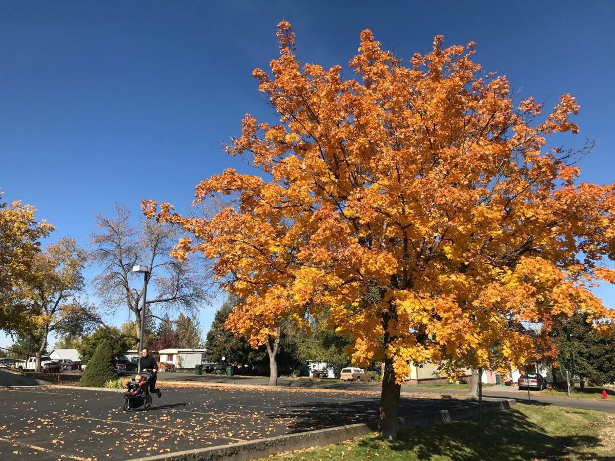Autumn's beauty