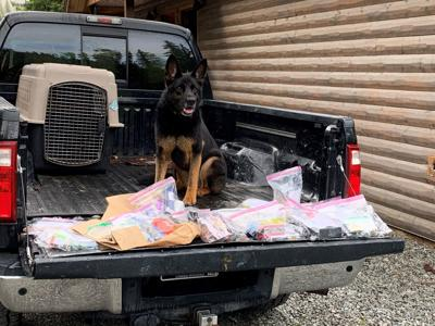 Narcotics detection canine