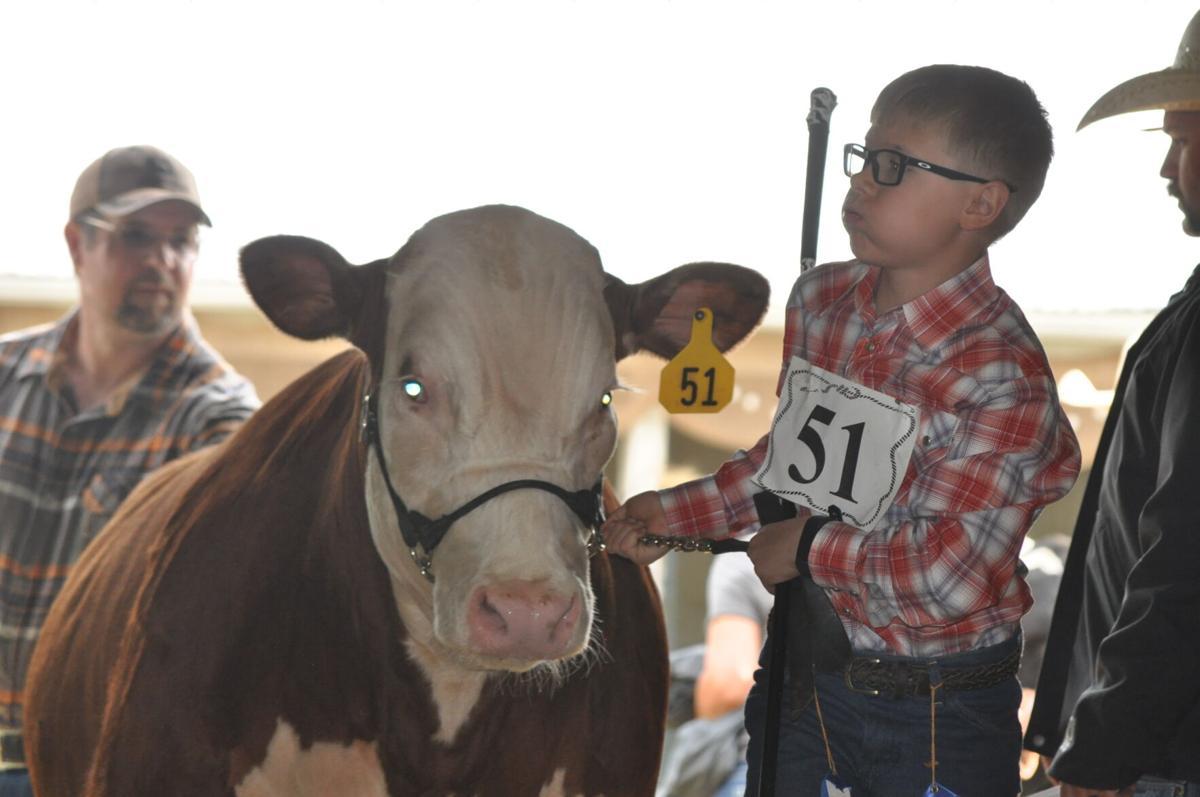 Idaho County Fair photo 1