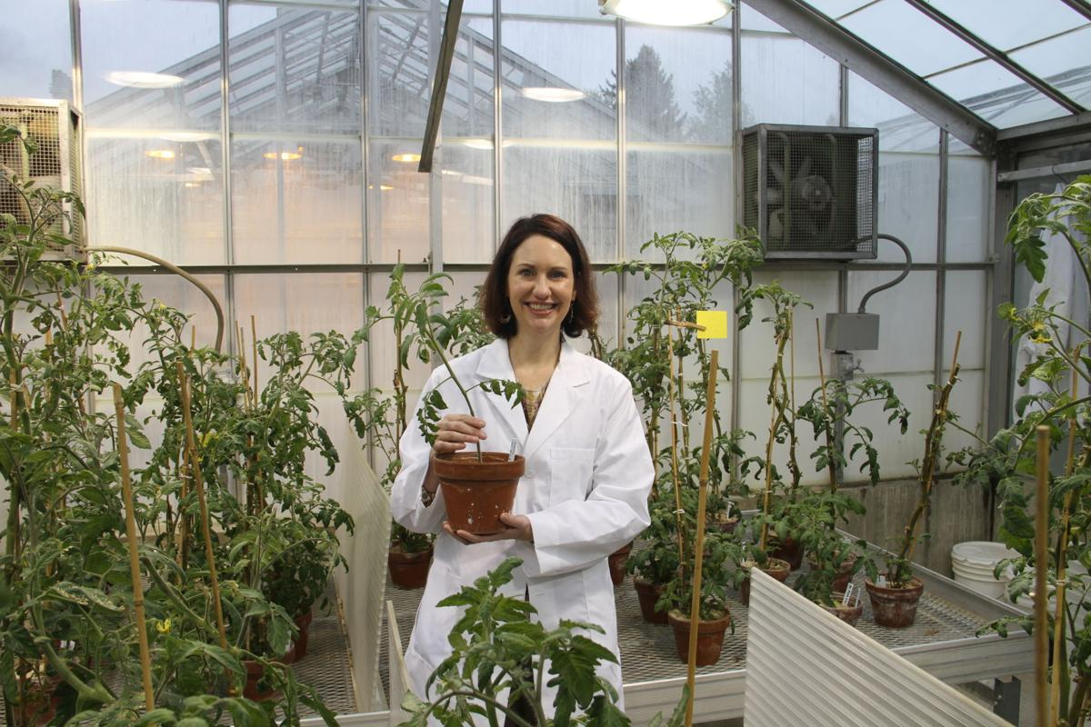 Plants that fight back: WSU researchers join forces to combat parasitic worm