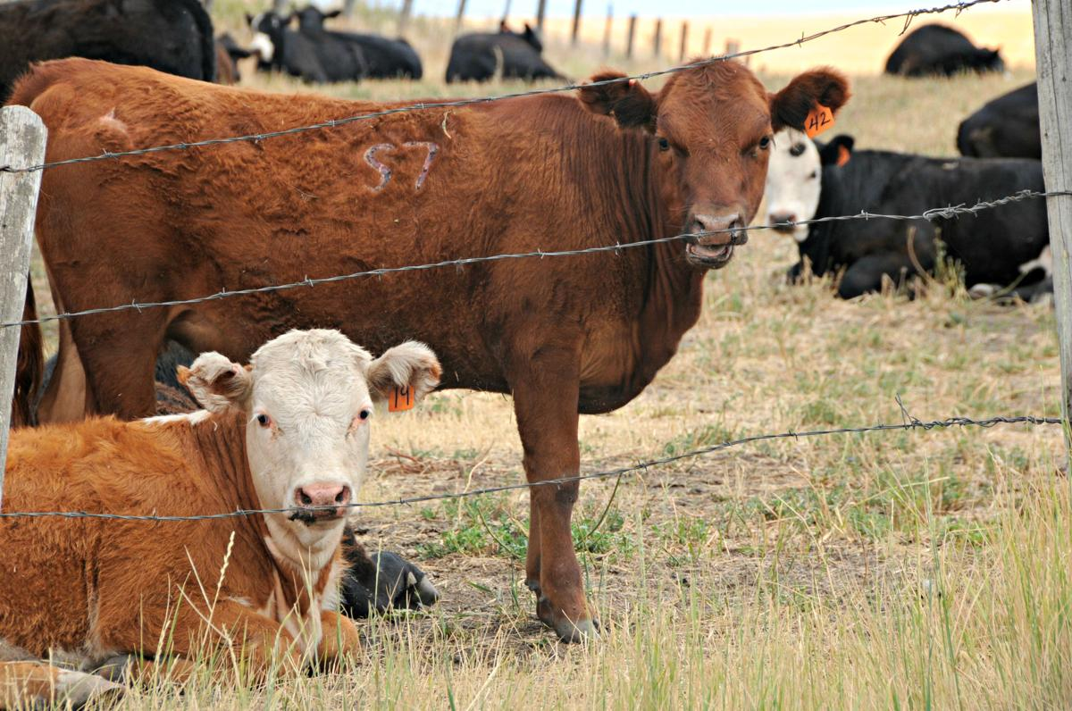 County producers to present at Jan. 8 grazing conference