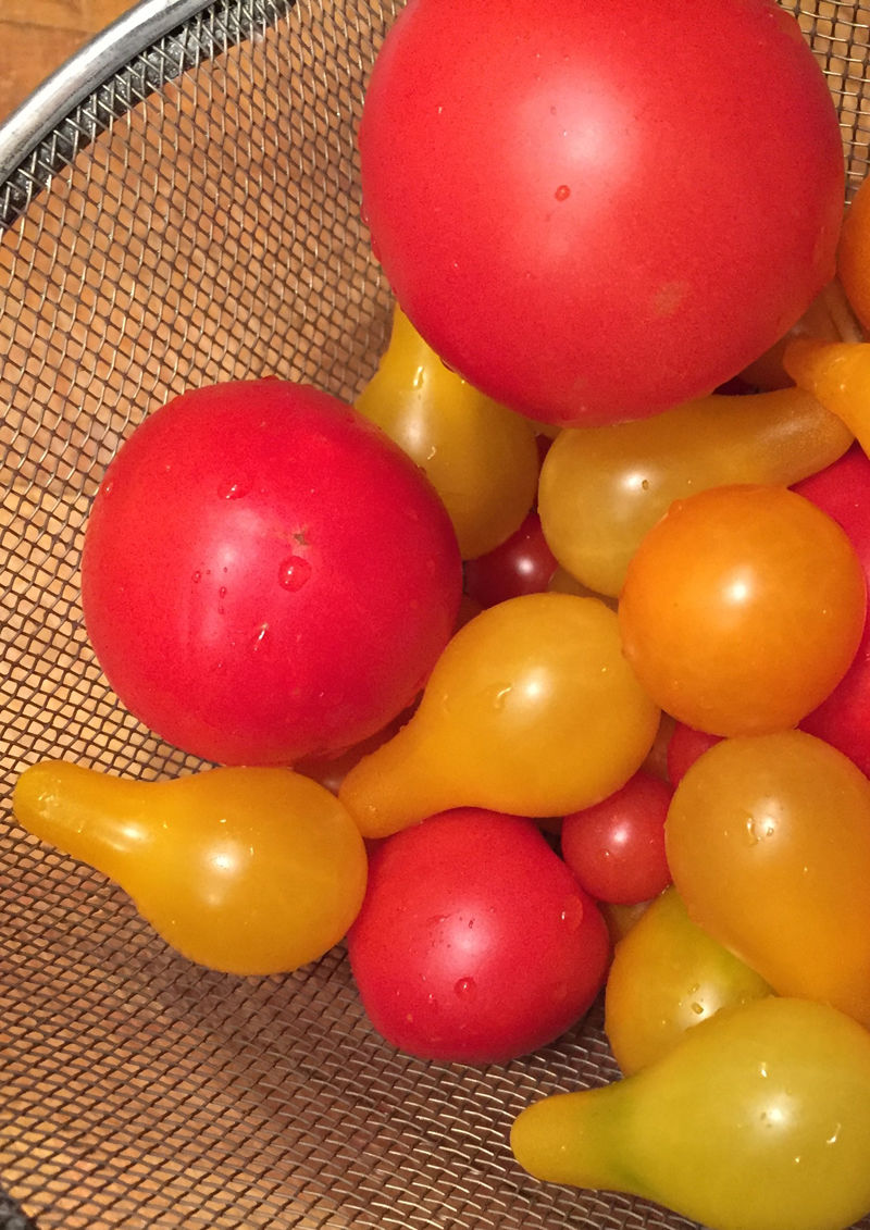 HEALTH: Are tomatoes are good for you?