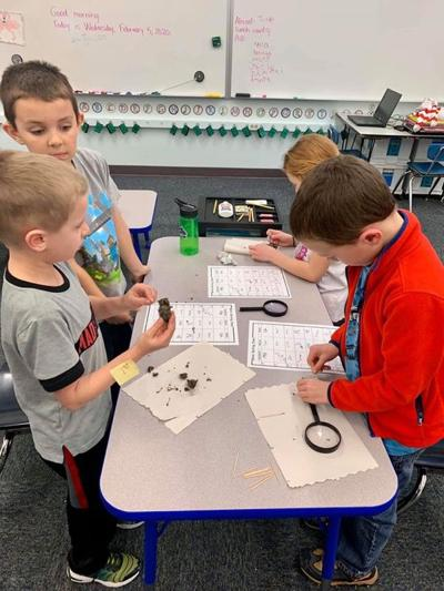 First graders dissected owl pellets