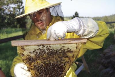 'Huge black cloud' -- Holliman works on moving, saving bees