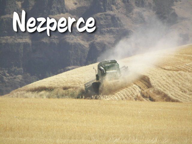 Nezperce News