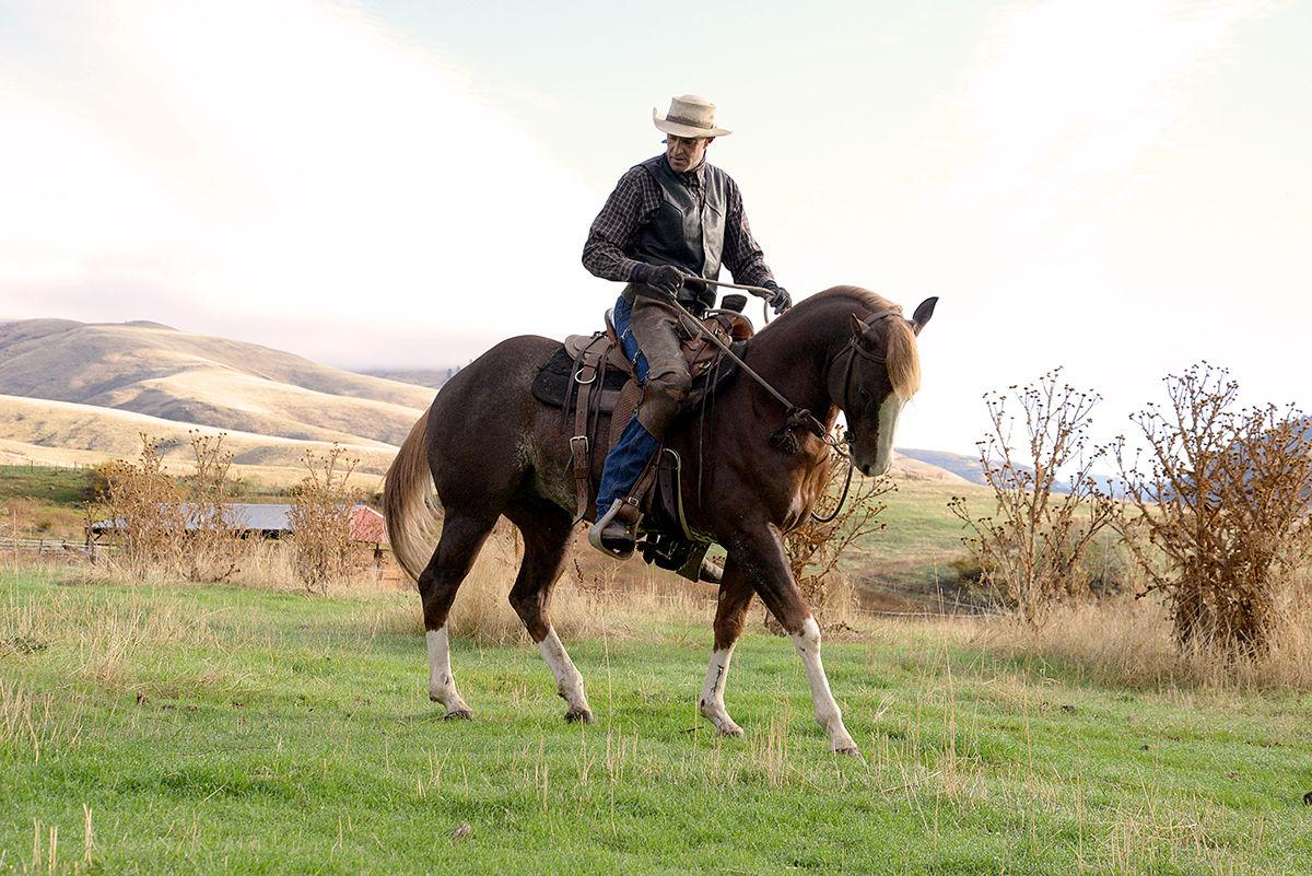 Tim McNamee: Riding home on a loose rein