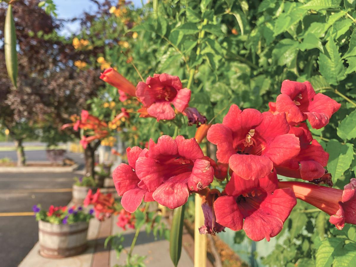 Flowers at Green Acres Nursery photo