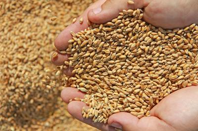 All Wheat Stocks Stored in Northwest Region Down 23 Percent from March 1, 2017