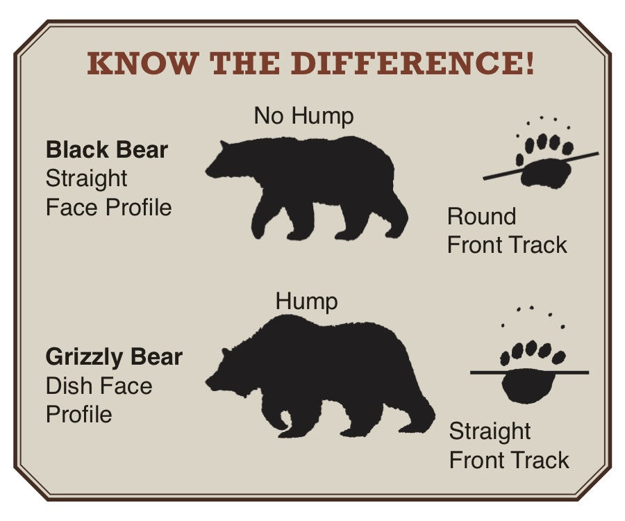Know the difference between a black bear and a grizzly bear