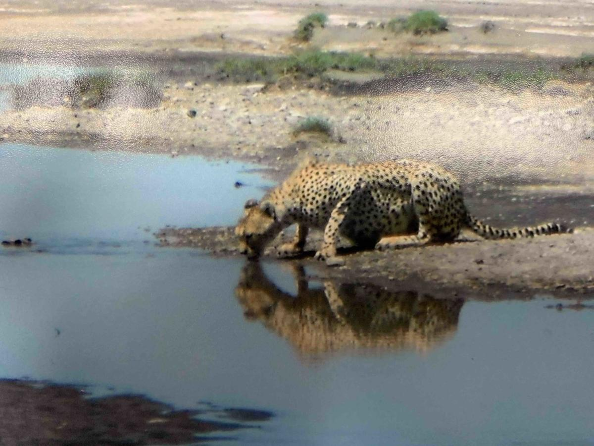 Dave and Maxine Riggers' African safari